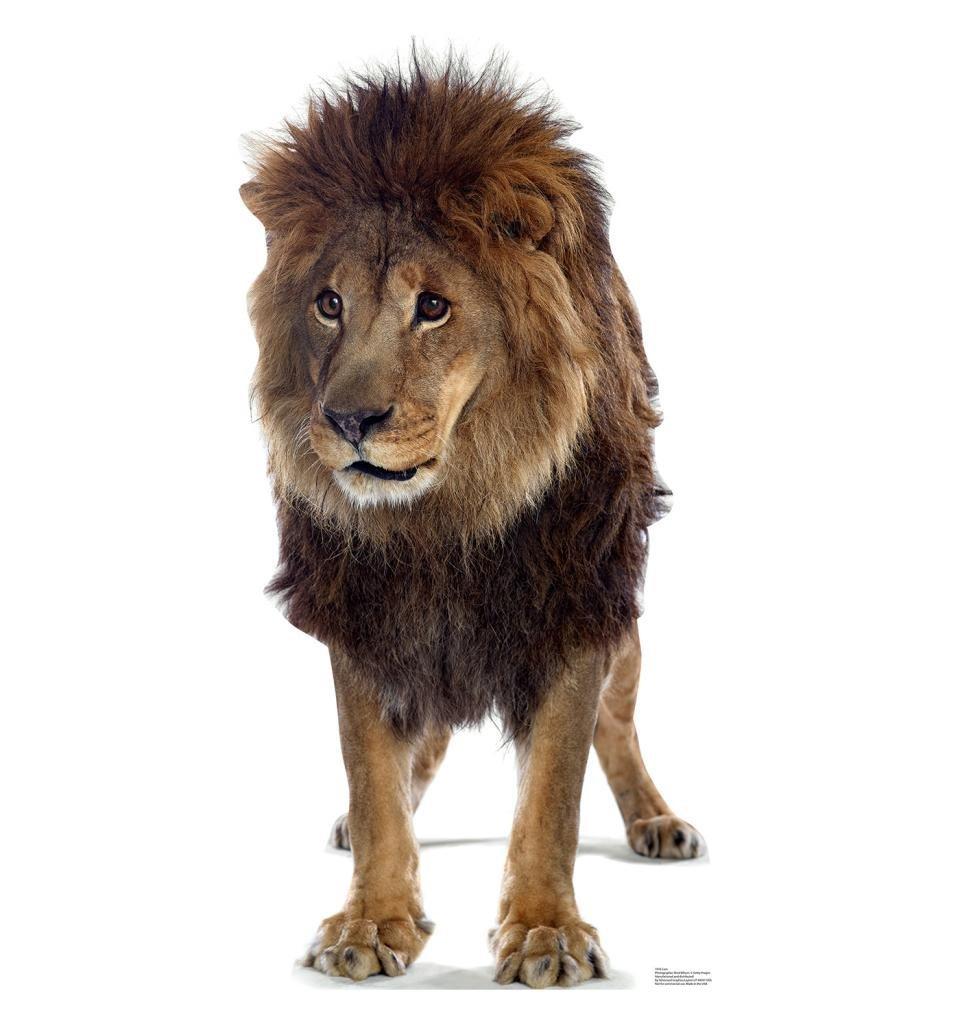 Roar! VBS Decor Ideas